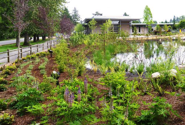 Bellevue-Botanical-Garden-wetland